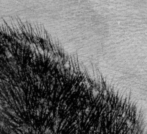 muff etching